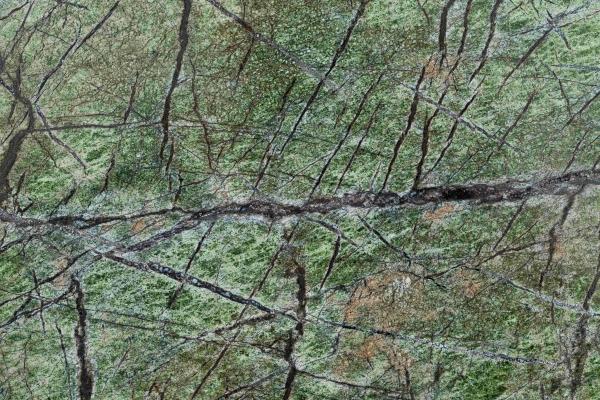 green-forest-remasterBB90B95B-951B-192F-D635-B736376C3716.jpg